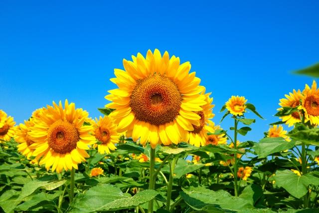 夏の健康管理
